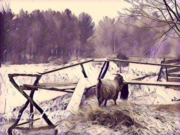 A got in winter