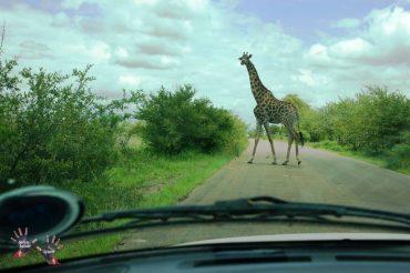 Kruger Park & Drakensberg
